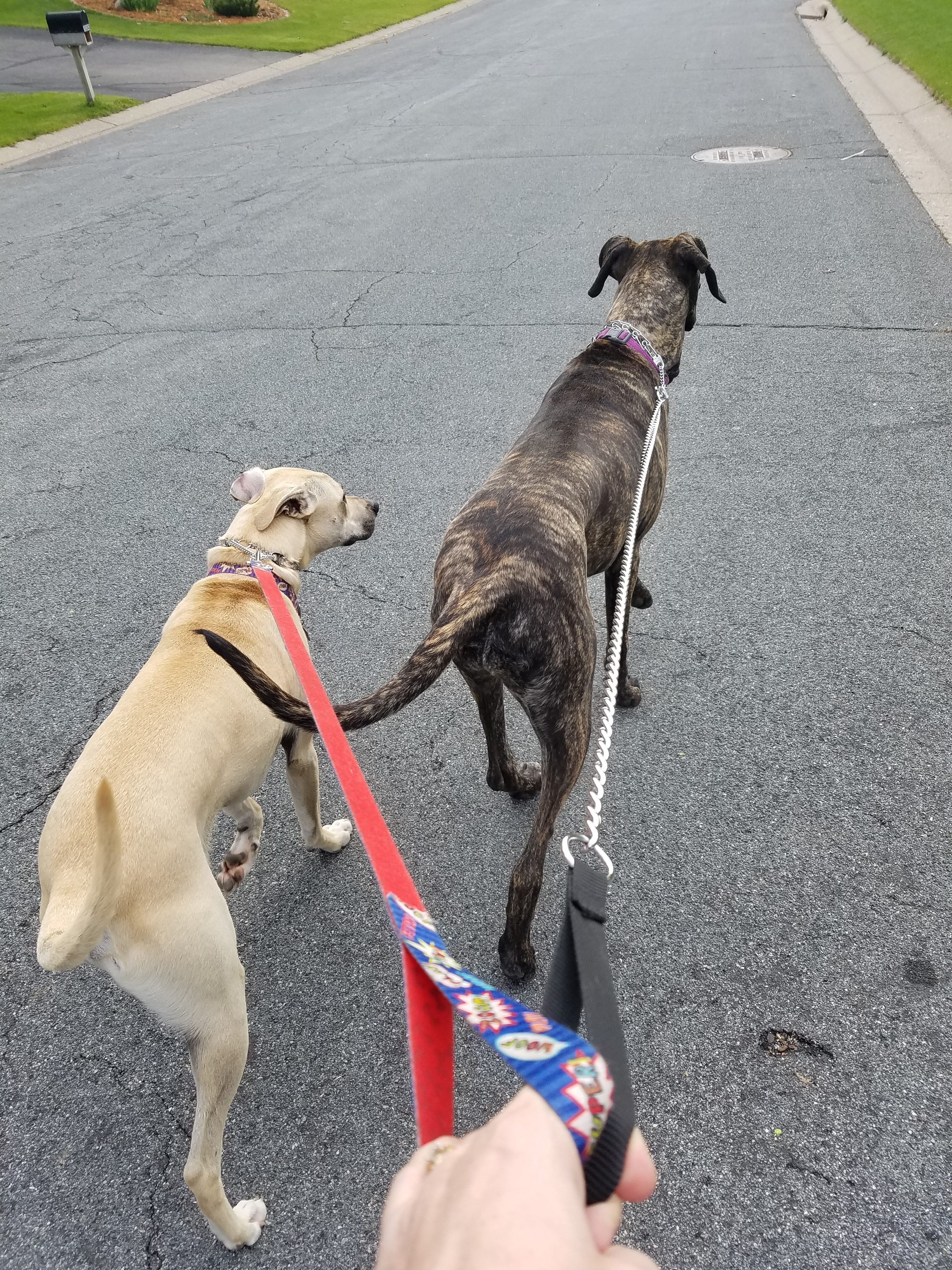 10 Life Lessons I've Learned From My Dogs